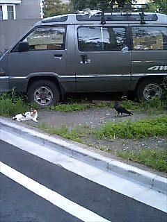 猫とカラス
